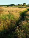 les marais au nord du lac
