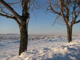 Saint-Laurent glacé entre deux arbres