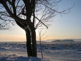 l'arbre biscornu