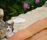 le chat sur le mur