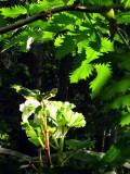 plante en sous-bois