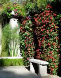 le banc devant les plantes grimpantes