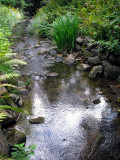 Une ambiance pour le ruisseau