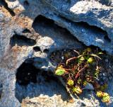 la caverne aux plantes grasses