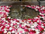 la fontaine pleine de pétales