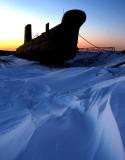 Un loup de mer sur la neige