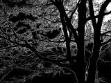 arbre de Coulonge