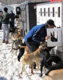 condo à chiens
