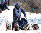 4 chiens de large