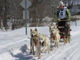 les chiens du 6 au retour