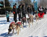 six chiens hors d'haleine