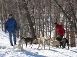 les chiens dans la forêt