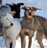 trois chiens trois couleurs