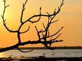 La branche sympatique