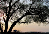 quatre touristes et the arbre