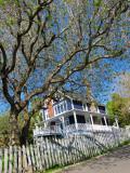 L'arbre aux deux printemps sur le chemin du quai
