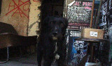 chien dans le squat de prague