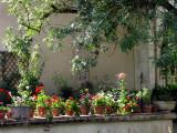 rangée de pots à fleurs