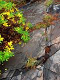 automne vert et jaune