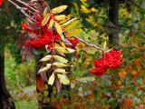 couleurs et fruits d'automne