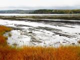 marée base et herbes oranges