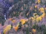la chute dans l'automne