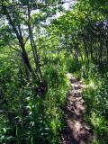 sentier vers la chute Papinachois