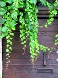 la porte derrière la verdure