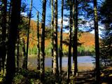L'automne derrière le rideau d'arbres