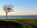 L'arbre en face de l'ile St-Barnabé