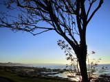 L'arbre dominent Rimouski