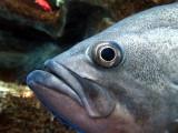 l'oeil du poisson