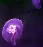 méduse dans le noir