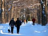Allée principale du Parc du Bois de Coulonge