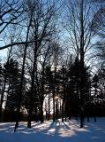 Forêt du Bois de Coulonge