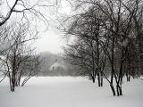 Le verger dans la tempête de neige