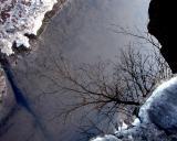 La branche dans l'eau