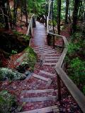L'escalier du Sault Mc Kenzie