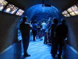 le tunnel sous l'aquarium