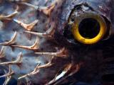L'oeil du poisson coffre