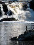 la chute au cormoran, Rivière du Loup