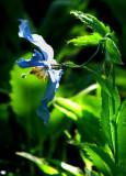 tons de bleu