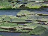 les rochers le long du fleuve