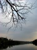 l'arbre regardant le lac