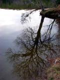 l'arbre profond