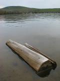 le tronc flottant