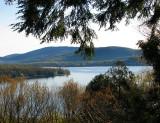 sous bois et lac