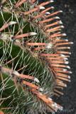 Jardín Cactus 4