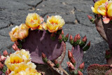 Jardín Cactus 6