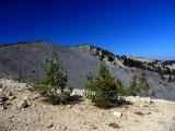 Magee Peak and whitebark pine regeneration